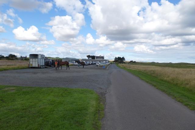 Horses in the golf club car park
