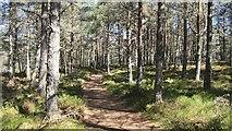 NH9617 : Abernethy Forest by Richard Webb