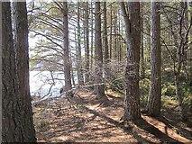 NH9718 : Pine woods, shores of Loch Garten by Richard Webb