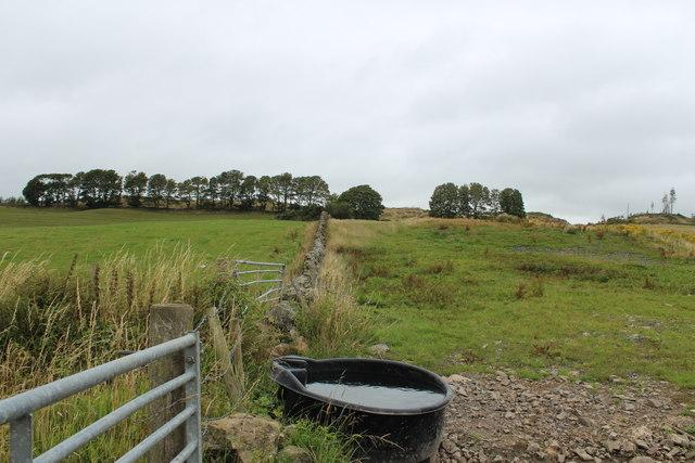 Stane Dyke towards Bareagle Wood
