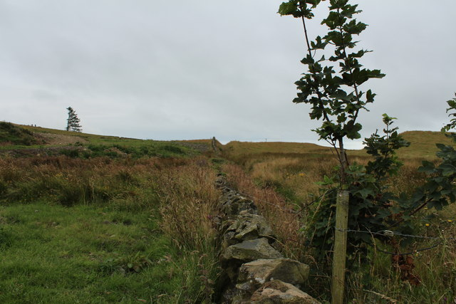 Stane Dyke towards Challoch Hill