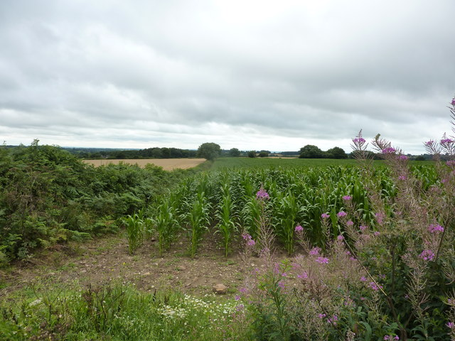 Maize in one field, barley in the other