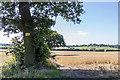 TQ3097 : Notice on Tree in Farmland, Trent Park, Cockfosters, Hertfordshire by Christine Matthews