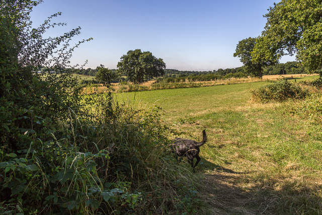 Farmland, Trent Park, Enfield, Middlesex by Christine Matthews