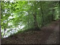 SX4764 : A steep drop from the path to the estuary of the Tavy by David Smith