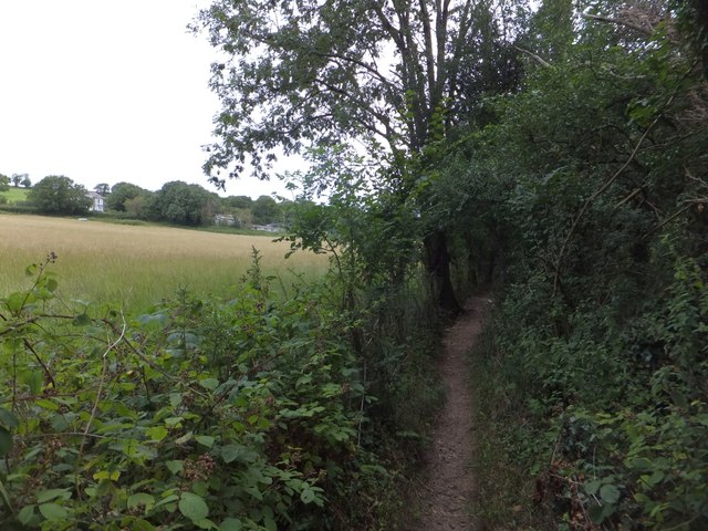 Part of the footpath by the river Tavy near Bere Ferrers