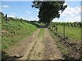 TQ0718 : Track through vineyard by Peter Holmes