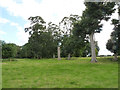 SK8632 : View into Denton Manor Park by Alan Murray-Rust