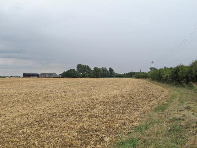 Recently harvested wheat field, near Holt's Farm, Stebbing