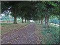 TL6524 : Driveway to Stebbing Park by Roger Jones