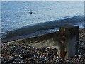 TQ9275 : Seagull, Sheerness Beach by Chris Whippet