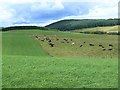 NO2051 : Field with cattle near Mains of Creuchies by Oliver Dixon