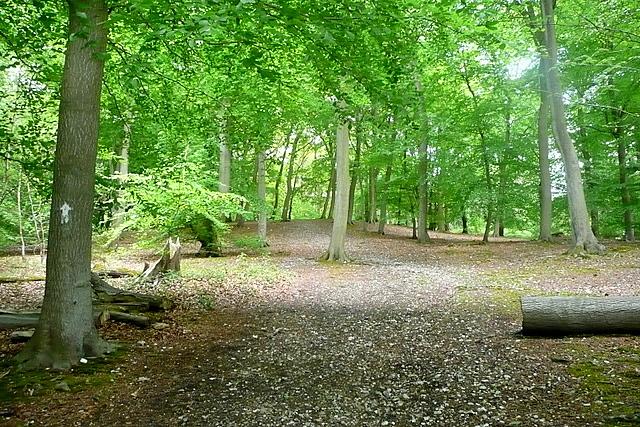 In Pullingshill Wood