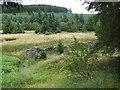 NY7691 : Ruined farmhouse near Boghead Bastle by Oliver Dixon