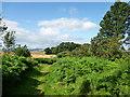 NO1706 : Path by Glen Burn by Alan O'Dowd