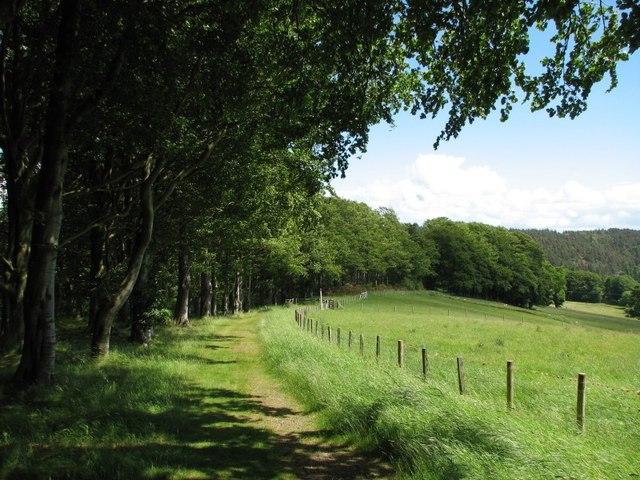 Field, woodland boundary