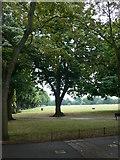 TQ2475 : Wandsworth Park by Eirian Evans