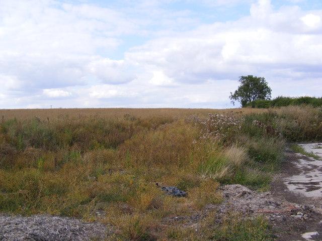 Field near the former Badingham Hall