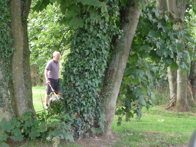 Stoneyford : Grassy Area & Trees