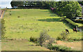 J4569 : Fields, Comber by Albert Bridge