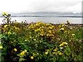 C3023 : Weeds, Inch Island by Kenneth  Allen