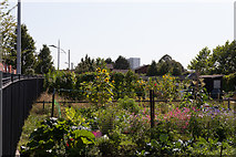 SU4212 : Radcliffe Road allotments, Northam by Peter Facey