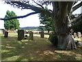 TQ7038 : Beech tree in St Margaret's Churchyard, Horsmonden by Marathon