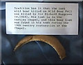 NY7708 : Boar tusk, Kirkby Stephen Church by Karl and Ali