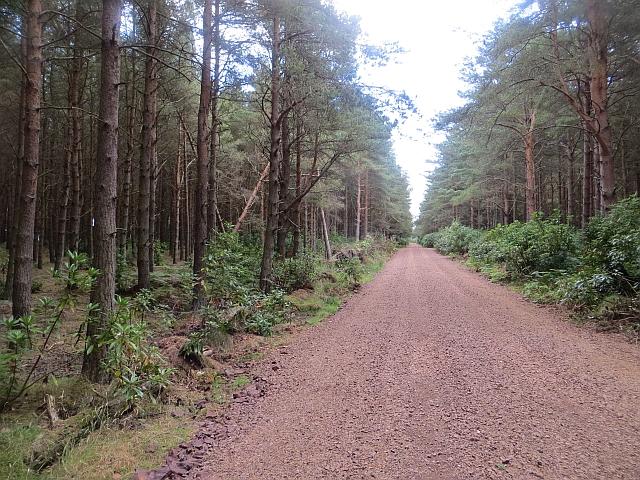 Brownrig Wood by Richard Webb