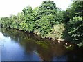 NZ3411 : River Tees at Dinsdale by Oliver Dixon