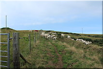 NX1430 : Mull of Galloway Trail near East Tarbet by Billy McCrorie