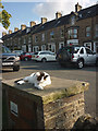 NY9425 : Sunbathing cat, Middleton-in-Teesdale by Karl and Ali