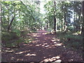 TG4800 : Path through woodland at Fritton Lake Country Park by Helen Steed