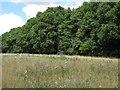 TL7630 : Thistles near Oak Grove, Gosfield by Roger Jones