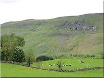 NS6378 : Cattle, Bencloich by Richard Webb