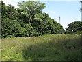 TM1322 : Small wood near Shair Lane, Tendring by Roger Jones
