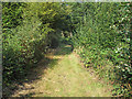 TM1520 : Path in Weeleyhall Wood by Roger Jones