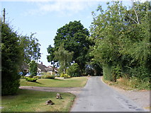TG2902 : Framingham Earl Road, Yelverton by Adrian Cable