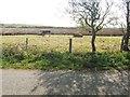 NX1042 : Three bulls in a field by Ann Cook