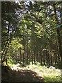 SS6815 : Longmoor Wood by Derek Harper