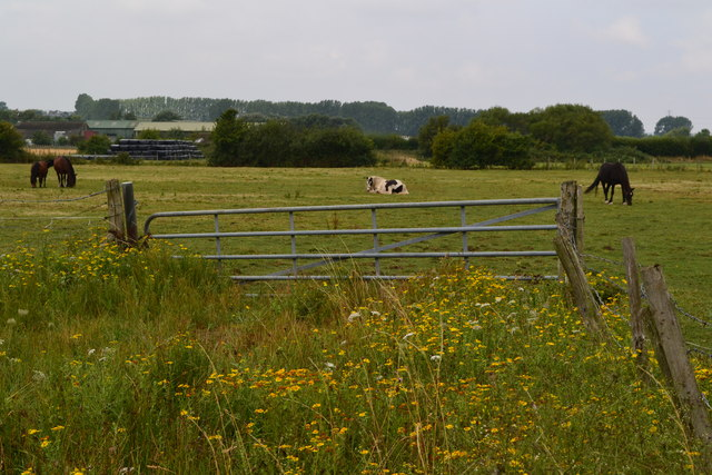 Horses in field behind Thanet Way Services