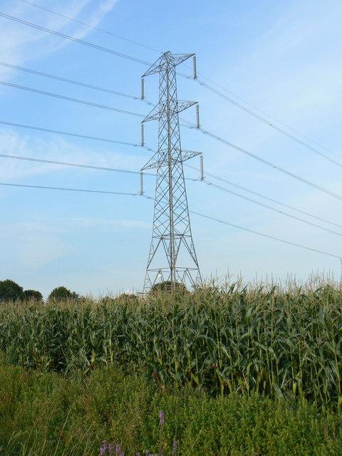 Pylon in maize field on Godney Moor