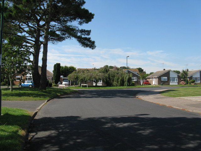 Conifers and willows on Andrew Avenue Felpham