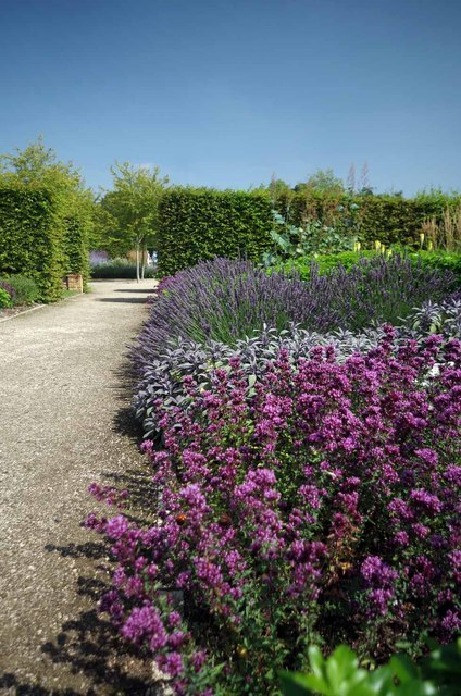 Purple Patch in the Walled Garden