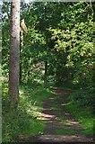 TL8425 : Path in the Plantation by Glyn Baker