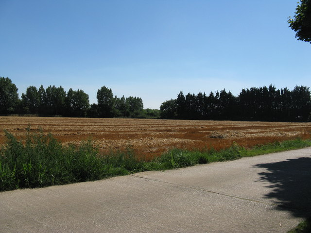 Harvested field by Hills Nursery at Runcton