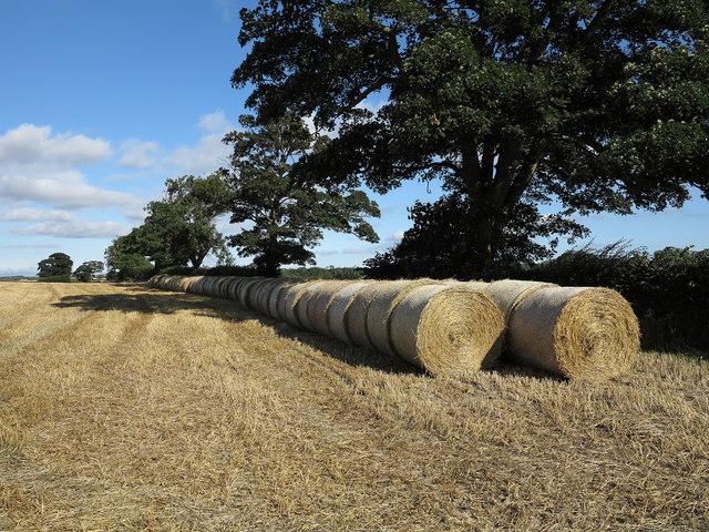 Straw bales beside B6279
