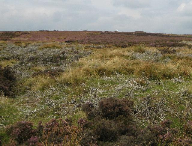 Moorland near Bank Top
