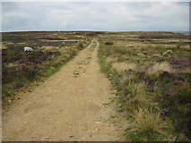 SE7294 : Moorland track from Ana Cross by Pauline E