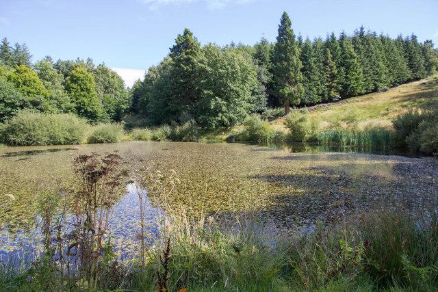 The Octagon Pond, Gibside